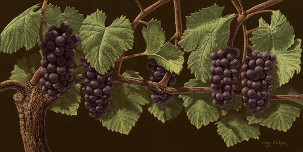 Grape Vines Painting Pinot noir grape vinesPinot Noir Grape Vines